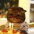 爱吃番茄的猫儿