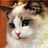 毛毛的大猫猫